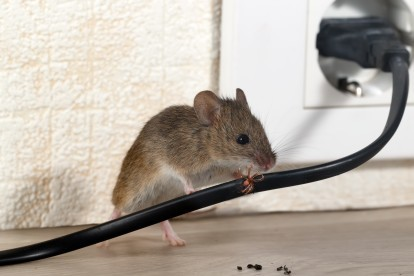 Pest Control in West Drayton, Harmondsworth, Sipson, UB7. Call Now! 020 8166 9746